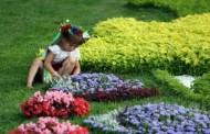 Ко Дню Киева высадят миллион цветов
